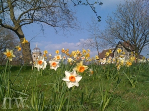 My favourite reading spot: Daffodils in spring and grasses in summer