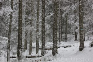 snow, trees, forest
