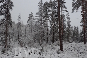 snow, winter, forest, Norway