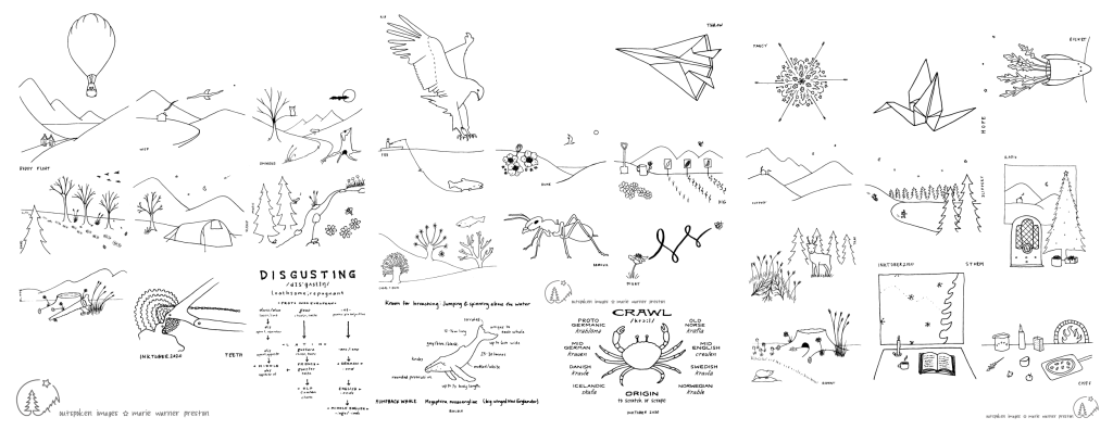 Compilation of line drawings created with pen, based on Norwegian nature. ©2020 Outspoken Images by Marie Warner Preston