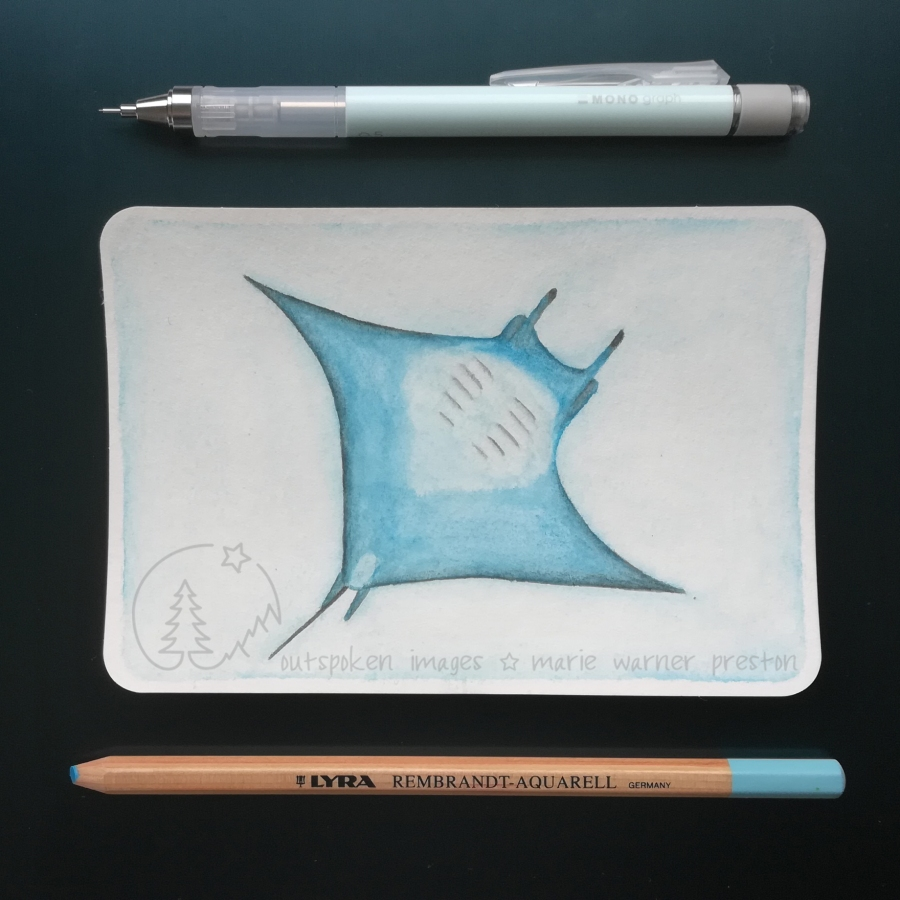 blue giant manta ray watercolour painting with blue pencils on blue backgroun. ©2021 Outspoken Images by Marie Warner Preston