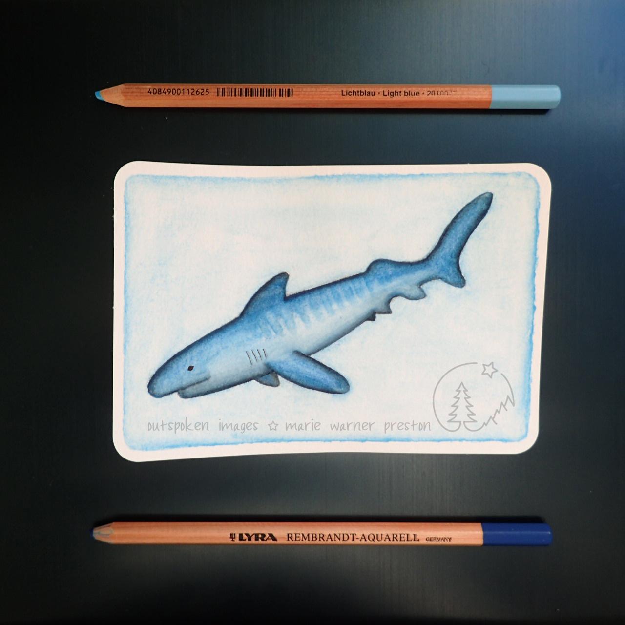 Tiger shark (watercolour painting)